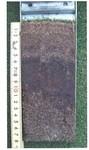有機物集積層(5cm〜11cm)